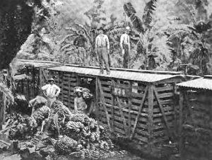 caribbean-coast-bananas