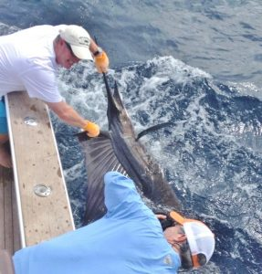 costa rica jaco fishing sailfish