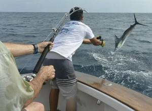 deep-sea-marlin