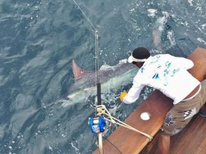 jaco fishing pacific blue marlin