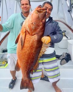 los suenos fishing cubera snapper