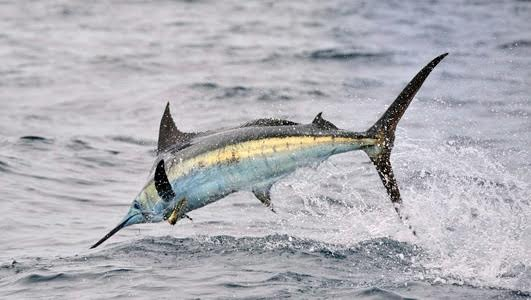 Fish for Marlin in Quepos and Manuel Antonio