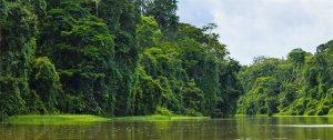 caribbean-tortuguero-national-park
