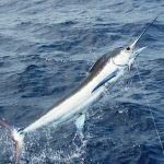 Save on Pacific fishing