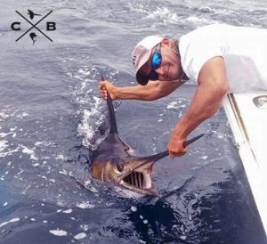 south pacific blue marlin