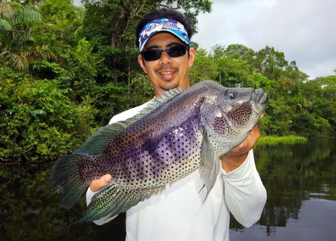 Fish Costa Rica for Guapote on this catch and release sport fish.