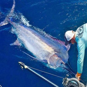 Los suenos marlin tagged and released